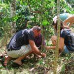 Parfois on participe à la prospérité de la plantation !