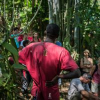 Visite guidée de la plantation